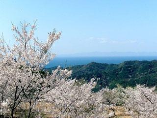 西山千本桜写真1