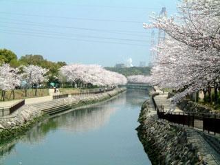 平和市民公園の桜|花見特集2016