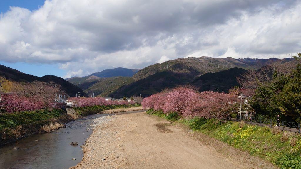 桜 伊豆 河津 伊豆の桜の名所10選  静岡県の情報サイト