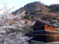 岩殿山丸山公園の桜