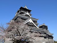 The Cherry Blossoms of Kumamoto Castle