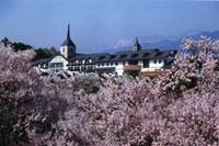 荒神山公園の桜の写真