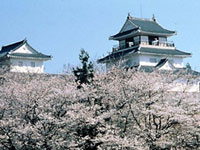 The Cherry Blossoms of Yukyuzan Park