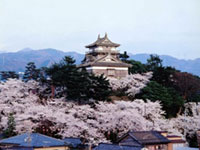 The Cherry Blossoms of Maruoka Castle (Kasumigajo Park)