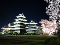 The Cherry Blossoms of National Treasure Matsumoto Castle
