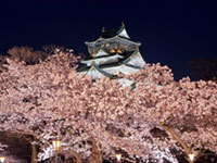 The Cherry Blossoms of Osaka Castle Park