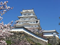 The Cherry Blossoms of Himeji Castle