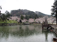 The Cherry Blossoms of Shikano Castle Ruins Park