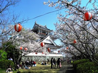 The Cherry Blossoms of Myokensan Park