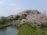 三室山(竜田公園)の桜