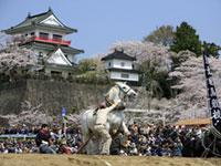 城山公園(宮城県)の桜