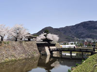 The Cherry Blossoms of Matsushiro Castle Ruins