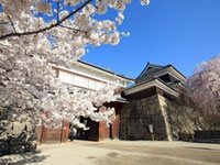 The Cherry Blossoms of Ueda Castle Ruins Park
