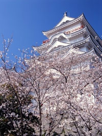The Cherry Blossoms of Fukuyama Castle Park