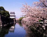 大分城址公園 外苑の桜