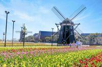ハウステンボスの桜