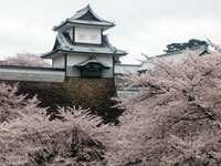 The Cherry Blossoms of Kanazawa Castle Park