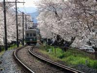 嵐電 桜のトンネルの桜