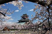 清洲城(清洲公園)の桜