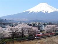 富士急行線 寿駅の桜
