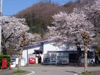 富士急行線 田野倉駅の桜