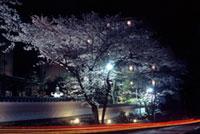 湯の花温泉の桜