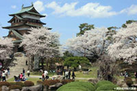The Cherry Blossoms of Takashima Castle