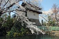 高崎城址の桜
