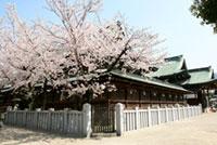 大阪天満宮の桜