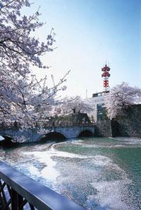 福井城址の桜