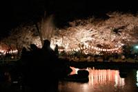 高崎公園の桜