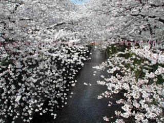 目黒川写真1