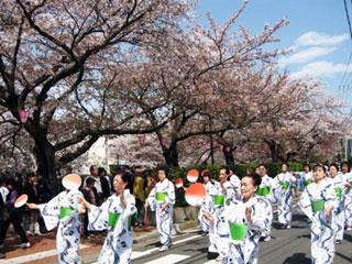 大岡川プロムナードの桜の写真4