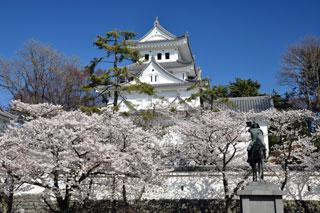 大垣城の桜写真1