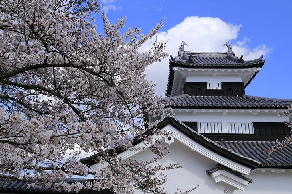 「福島県 白河小峰城桜まつり」の画像検索結果