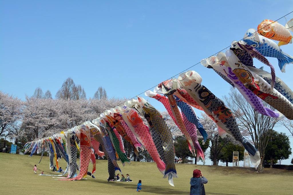 壬生町総合公園の桜 花見特集2019