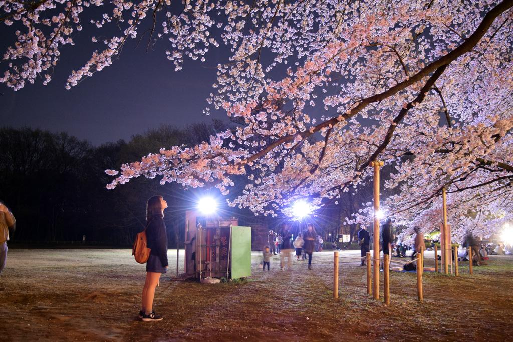 伊奈町無線山桜並木|花見特集2019
