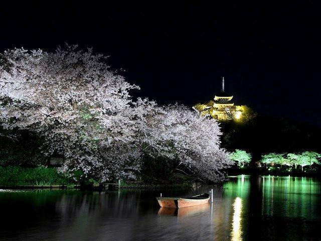 https://sp.jorudan.co.jp/hanami/images/spot/640/118753_2.jpg