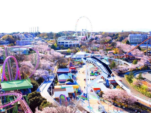 lightbox よみうりランドの桜写真1