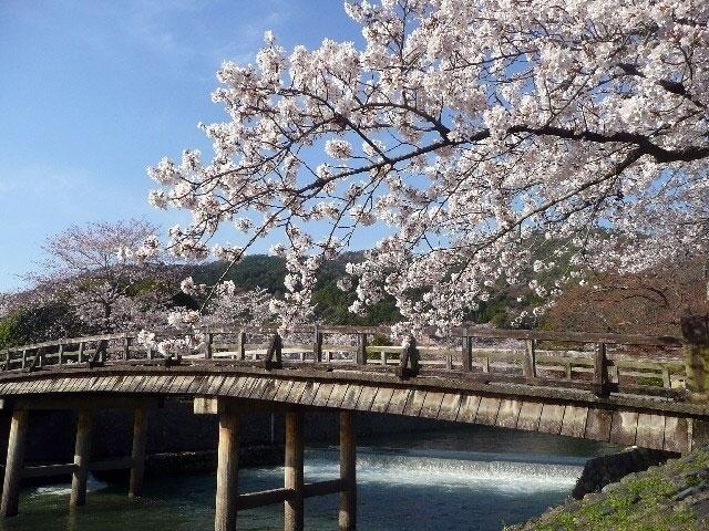 https://sp.jorudan.co.jp/hanami/images/spot/640/125751_1.jpg