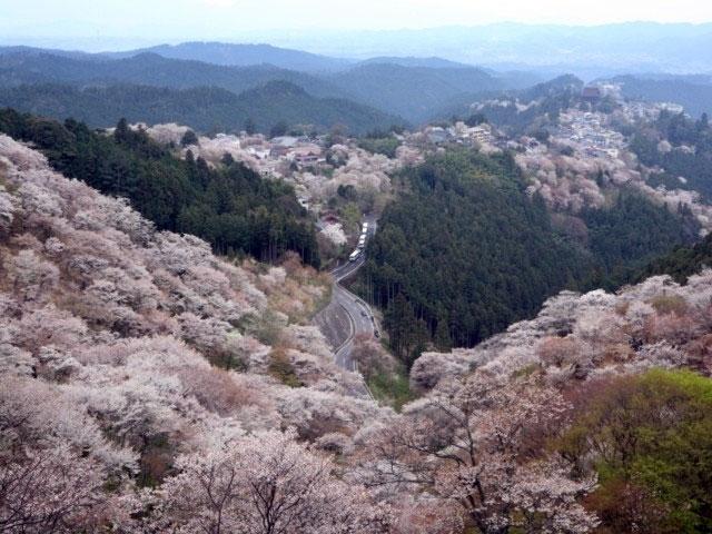 吉野山の桜|花見特集2018