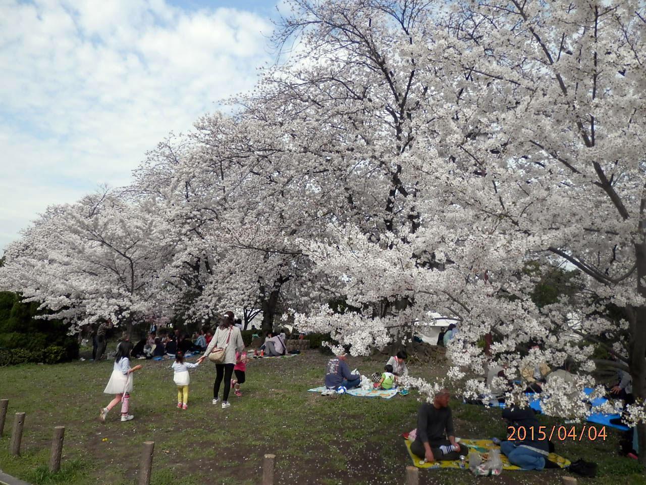 元茨木川緑地の桜|花見特集2021