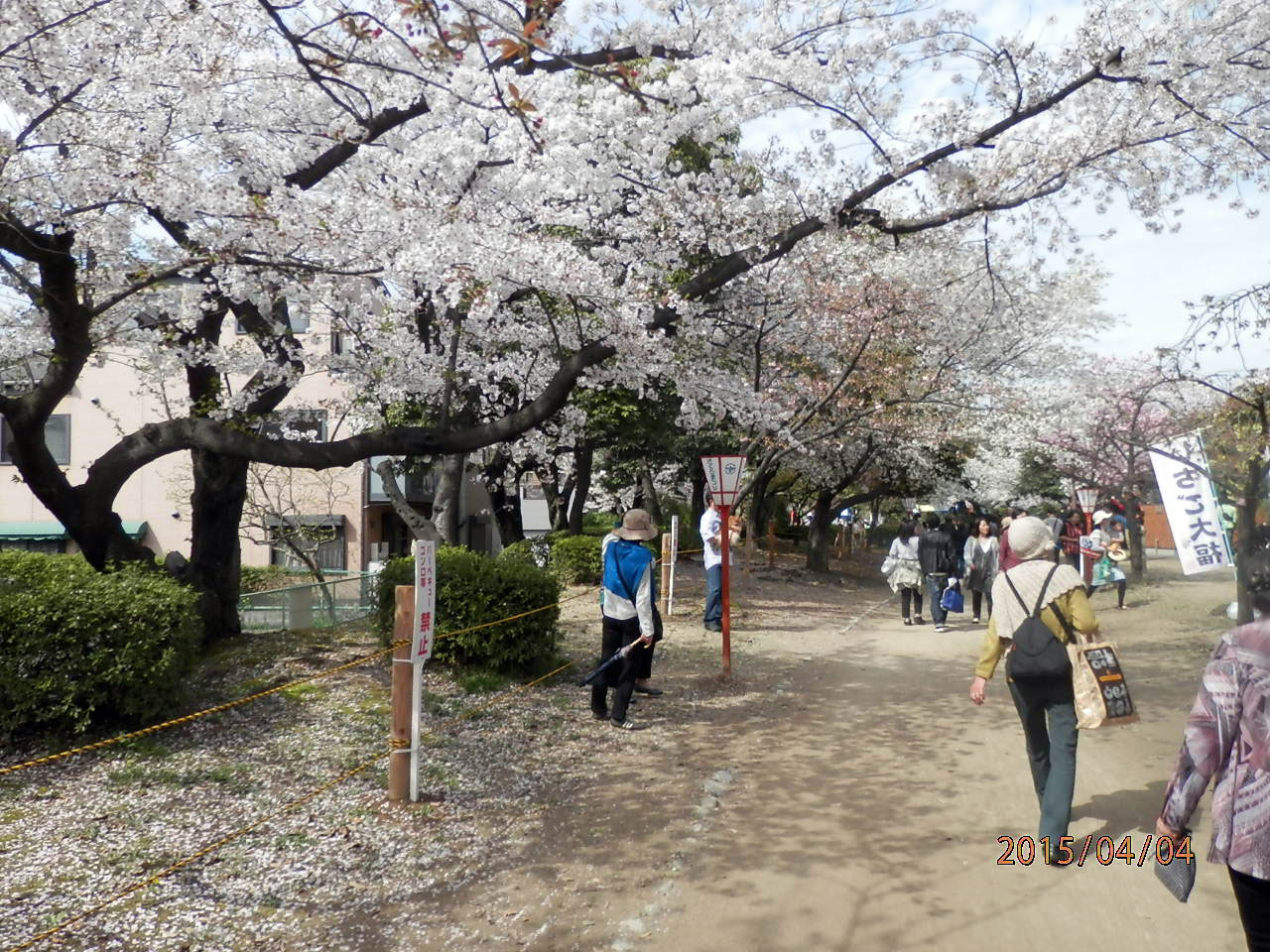 元茨木川緑地の桜|花見特集2018