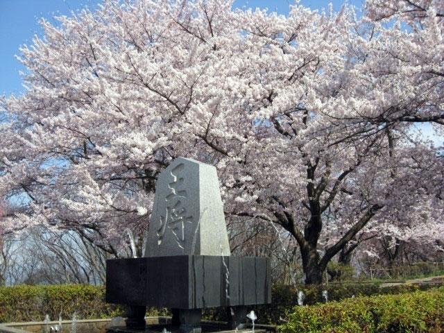 天童公園(舞鶴山)の桜 花見特集2019