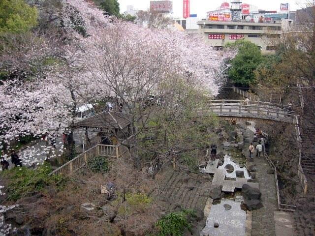 「音無親水公園(東京都北区王子本町1-1)」の画像検索結果