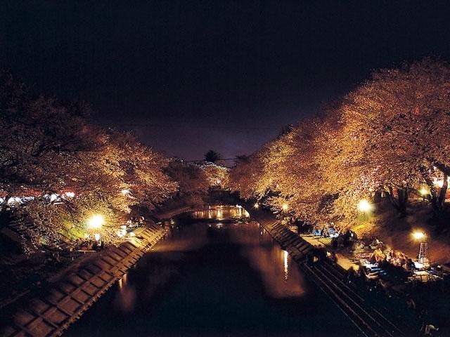 新境川堤の桜|花見特集2019