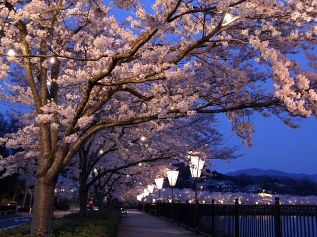 「庄原上野公園の桜」の画像検索結果