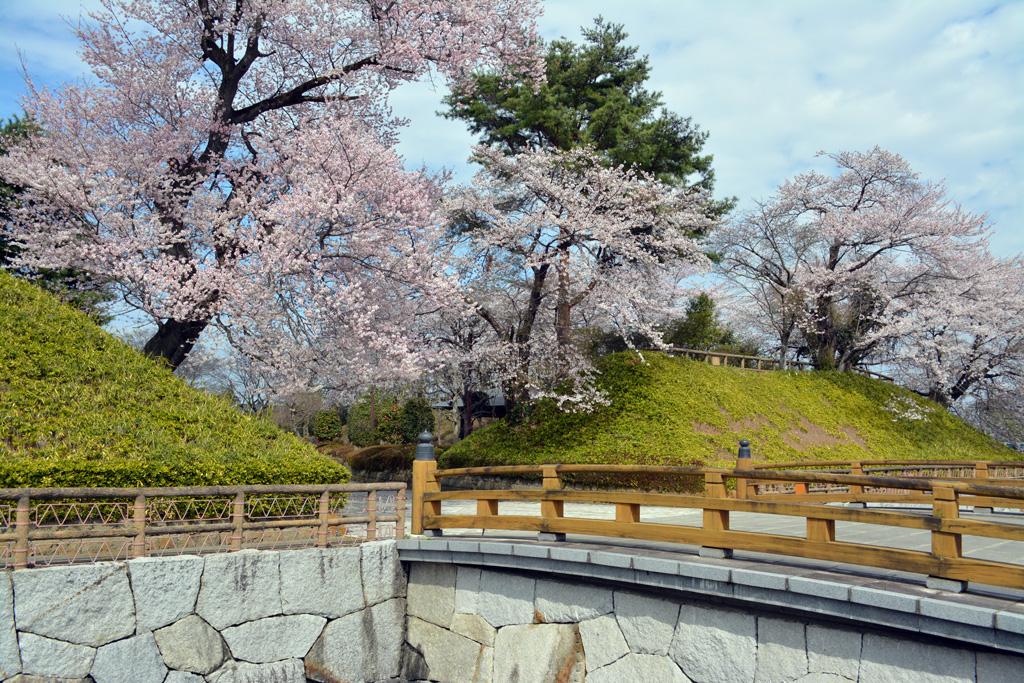 壬生町城址公園の桜 花見特集2019