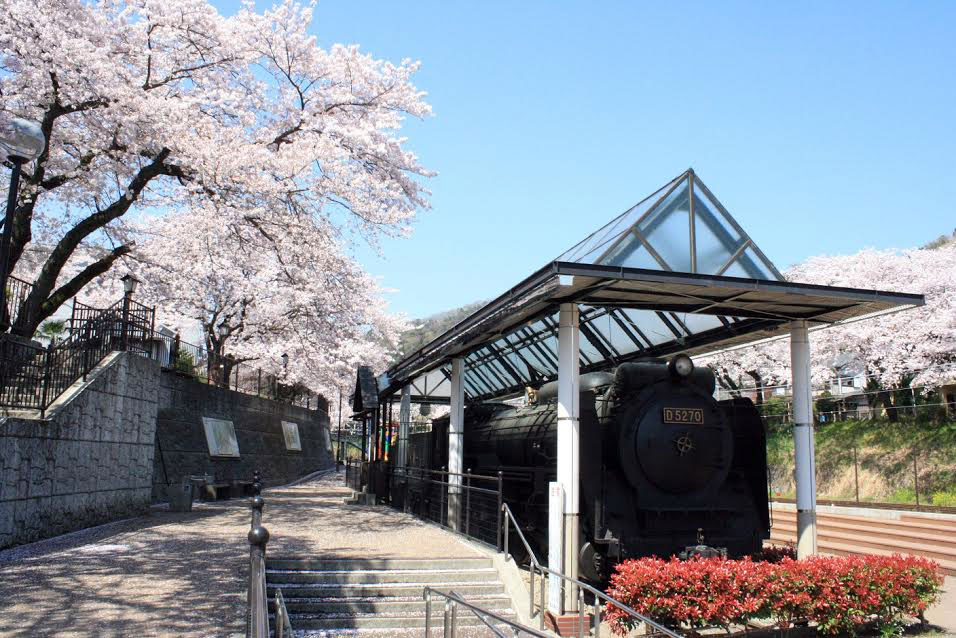 山北鉄道公園(御殿場線沿い)の桜|花見特集2019