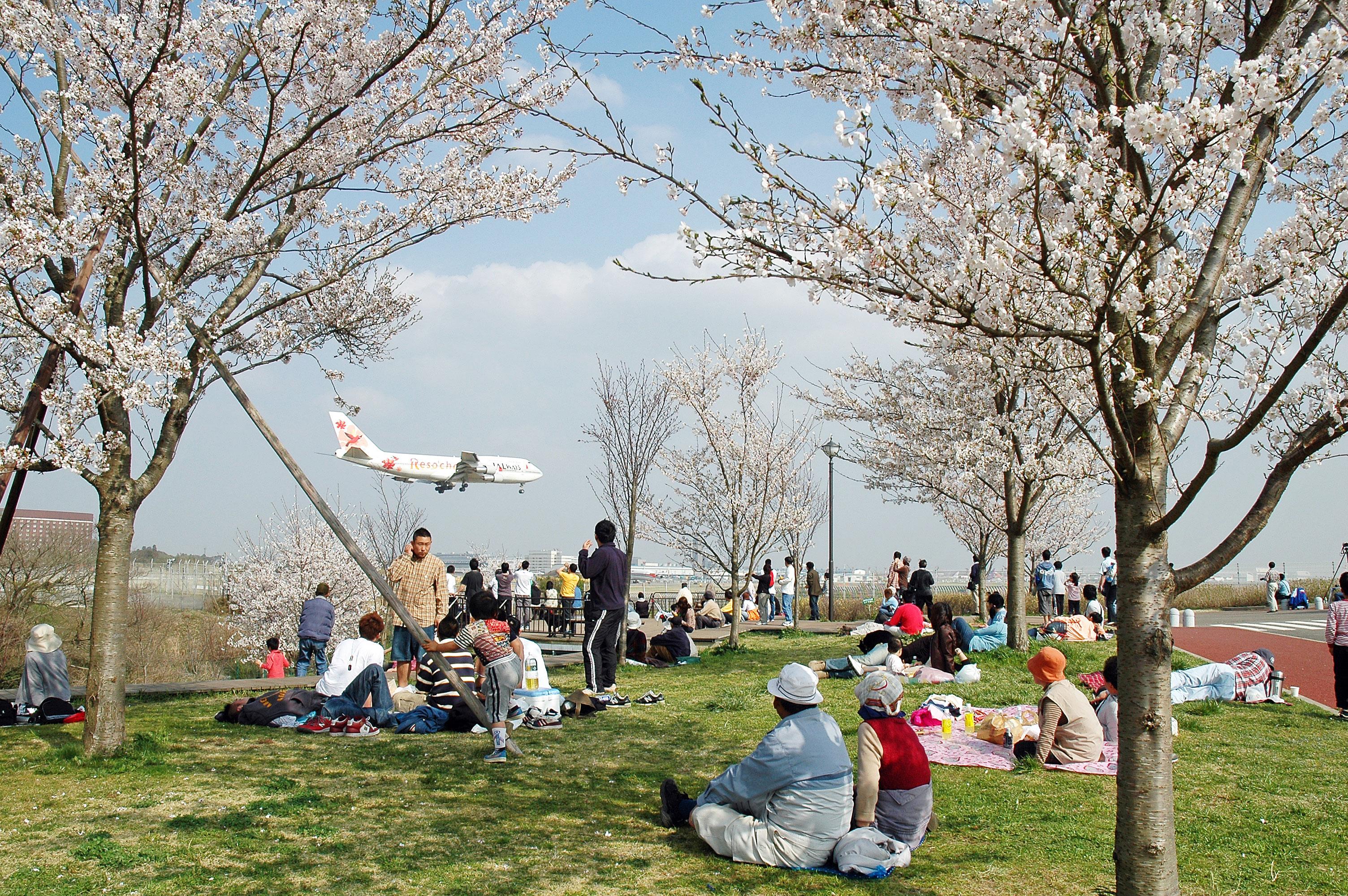 成田市さくらの山公園の桜|花見特集2019